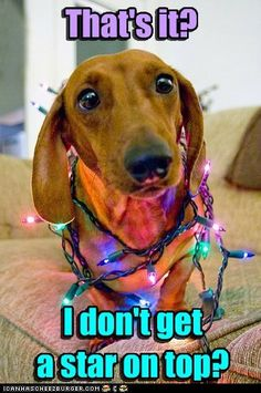 "Dachshund--the famous ""mommy what did you do to me? My weenie is the master of this look. Dachshund Funny, Dachshund Love, Daschund, Funny Dogs, Baby Animals, Funny Animals, Cute Animals, I Love Dogs, Puppy Love"