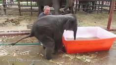 This baby elephant getting into a tub is my spirit animal - more at http://www.thelolempire.com