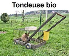 Une alternative au tracteur à poules ;-)