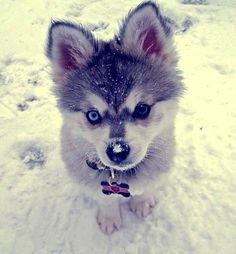Immagine di dog, cute, and snow