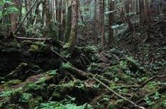 Google Image Result for http://www.therichest.org/cdn/525/348/75/c/wp-content/uploads/if-mount-fuji-erupts-aokigahara-forest-might-stop-being-what-some-people-call-the-suicide-capital-of-the-world.jpg