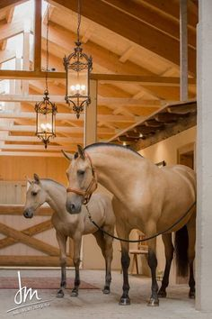 Beautiful :O Beuatiful horses and the stable!: