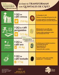 ¿Cómo se transforman los quintales de café?