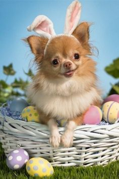 Dog in easter basket