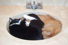 31 Provas de que gatos são líquidos