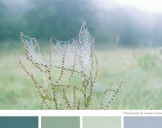 I could live in this color palette by ez at creature comforts. Mint Color Palettes, Colour Pallette, Colour Schemes, Color Combos, Color Patterns, Spider Art, Spider Webs, Beautiful Color Combinations, Creature Comforts