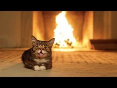 You Can Watch Lil Bub In Front Of A Cozy Fire For An Hour #cat #crazycatlady