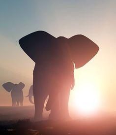 Gorgeous shot of an elephant at dusk.