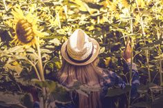 person wearing white hat beside sunflower fields Beautiful, free Hot photos from the world for everyone - Infinity Collections Girl With Hat, The Girl Who, Velcro Rollers, Identity In Christ, Sunflower Fields, Sunflower Garden, Types Of Women, Essential Oil Uses, Hair Photo