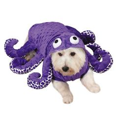 Blow other Halloween costumes out of the water with the Zack u0026 Zoey® Octo-  sc 1 st  Pinterest & How to Turn Your Dog Into a Fish for Halloween | Pinterest | Fish ...