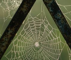 Webs!