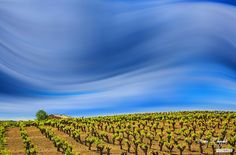 Le vignoble de Faugères au printemps © Alain Reynaud
