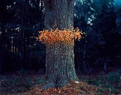Flying Swarms of Everyday Objects by Thomas Jackson I love environmental art. Land Art, Art Environnemental, Art Et Nature, Art Public, Instalation Art, Forest Art, Environmental Art, Outdoor Art, Tree Art