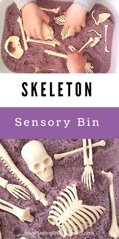 Skeleton sensory bin for Halloween. Toddlers and preschoolers will love learning about the human body with this taste safe sensory activity for Halloween. #halloween #sensory #toddlers #preschoolers #kindergarten Sensory Bins, Sensory Activities, Sensory Play, Halloween Activities For Kids, Science Experiments Kids, Toddler Preschool, Easy Halloween, Kids House, Easy Crafts