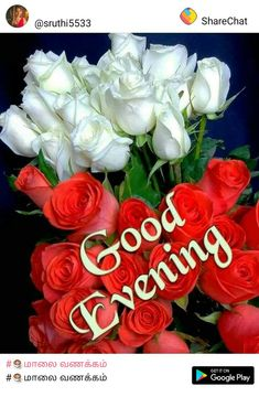 Take tea and watch tv. Good Morning Friends Quotes, Good Night Quotes, Morning Quotes, Good Evening Wishes, Good Evening Greetings, Good Morning Roses, Good Afternoon, Purple Calla Lilies, Calla Lily