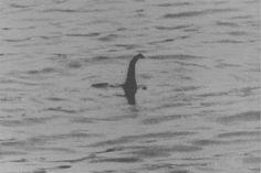 """fotografia tomada en 1934. en esta foto trata del monstruo de Loch Ness. la historia comienza cuando una nueva carretera se completó a lo largo de la orilla norte del Lago Ness, que ofrece fácil acceso a las vistas sin obstáculos del agua. Poco después, una pareja vio un """"animal enorme"""" en el Loch."""