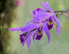 Pink Orchid | Flickr - Photo Sharing!