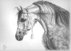 caballos bocetos - Buscar con Google