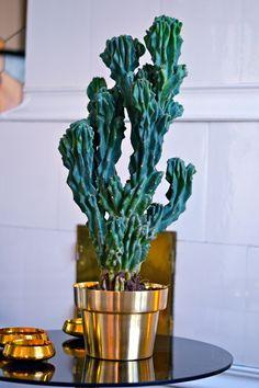 Kaktus i Skultuna-kruka