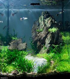 I want something like that - aquascaping Betta Aquarium, Aquarium Terrarium, Betta Fish Tank, Planted Aquarium, Aquarium Landscape, Nature Aquarium, Home Aquarium, Aquarium Design, Aquascaping