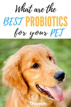 Are Probiotics really helpful to dogs? Learn more about how these powerful supplements can benefit your pet.