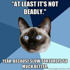 Chronic Illness Cat - Chronic Illness - EDS, Fibromyalgia, Gastroparesis, Autoimmune Disease Syndrome Ehlers Danlos, Síndrome De Ehlers Danlos, Marfan Syndrome, Chronic Illness Humor, Chronic Migraines, Chronic Pain, Fibromyalgia Pain, Mental Illness, Migraine Pain