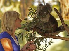 MOONLIT SANCTUARY WILDLIFE CONSERVATION PARK: Podrás ver canguros, koalas, demonios de Tasmania, aves coloridas y reptiles asombrosos. Recomendamos hacer una reservación para realizar un tour nocturno del Santuario Moonlit, donde podrás apreciar el mágico mundo nocturno de los animales autóctonos y observar especies en peligro de extinción, tales como el bettong, el quoll, el pademelon, el glider (o petauro) y la lechuza.