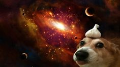 A dog with garlic on its' head in space [1920x1080] : wallpapers