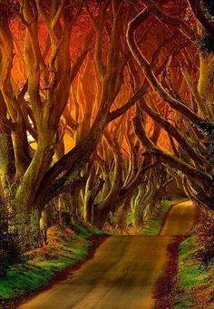The Dark Hedges Reviews - County Antrim, Northern Ireland.
