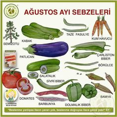 Slow Food, Dietitian, Eggplant, Color Mixing, Zucchini, Smoothies, Herbalism, Diy And Crafts, Vegetables