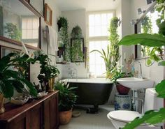Bathroom lots of plants LOVE