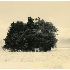 posted by @helenedelmaire - here's another one by Masao Yamamoto :)