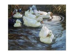 size: Giclee Print: Ducks on a Pond, by Alexander Koester : Best Chicken Coop, Building A Chicken Coop, Best Egg Laying Chickens, Raising Chickens, Aqua Farm, Duck Coop, Backyard Aquaponics, Natural Pond, Backyard Water Feature