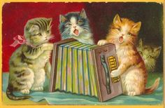 ACCORDION cats