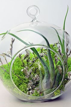 A custom terrarium will add a touch of delicate beauty to any tabletop. | 10 Easy Ways To Transform Your Space With Color