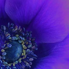 Stunning macro of a purple flower