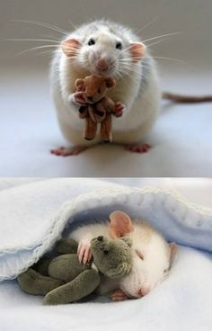 rat and teddy bear