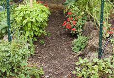 szalmabála kert Plants, Garden