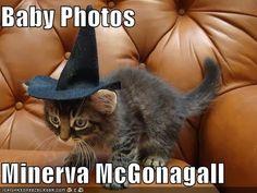 minerva mcgonagall animagus baby pics