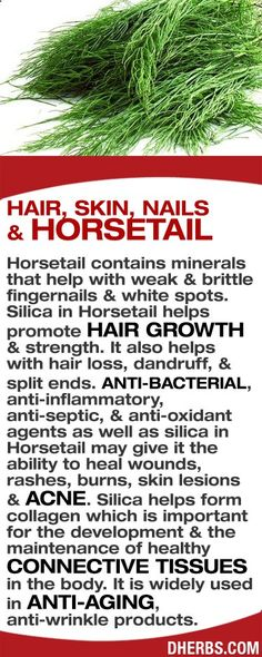 Horsetail contains minerals that help with weak & brittle fingernails. Silica in Horsetail helps hair growth & strength. Also helps with hair loss, dandruff & split ends. Anti-bacterial, anti-septic, & anti-oxidant agents as well as silica in Horsetail give it the ability to heal wounds, rashes, burns, skin lesions & acne. Silica helps form collagen, important in the development & maintenance of healthy connective tissues. It is used in anti-aging, anti-wrinkle products. #dherbs #healt...