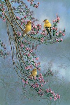 Gold Finches by Wanda Mumm Canvas Print - Gold Finches Canvas Art Print by Wanda Mumm Canvas Art Prints, Canvas Wall Art, Bird Paintings On Canvas, Gold Canvas, Bird Drawings, Bird Pictures, Mural Art, Bird Prints, Bird Art