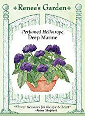 One of the most delightful of flowers for a perfumed garden is the fragrant heliotrope.