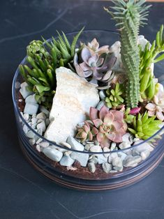 Add fresh color and life to your fall decorations with succulents planted in tiny pumpkins.