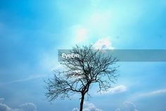 Low angle view of silhouette bare tree Tree Id, Bare Tree, Low Angle, Royalty Free Pictures, Silhouette, Clouds, Sky, Explore, Blue