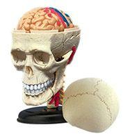 3-D Cranial Nerve Skull Puzzle