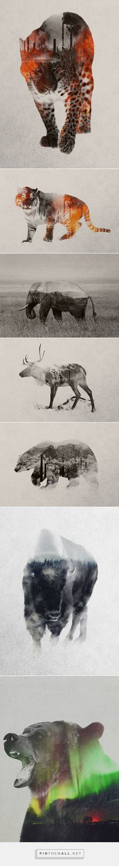 Natural Causes - Andreas Lie - Several in this set contrast the animals against a human environment - gorgeous and startling!