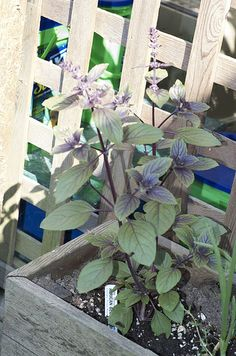 cool Herb Garden / http://www.everydaygardening.net/herb-garden-13/