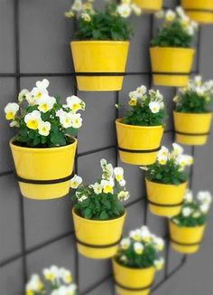 Yellow pots and flowers #hintofspring