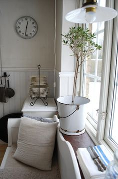 love the clock, lamp and over-wintered olive tree