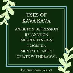 Kava is a herbal remedy that you can use for many issues, such as anxiety, depression, stress, muscle tension or opiate withdrawal. It also enhances mental clarity. #kavakava #naturalremedies #healingherbs #kratomalternatives